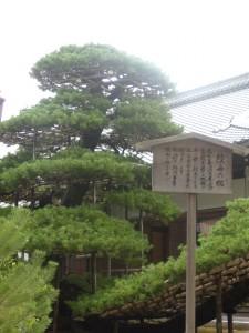 arbre dont la pousse est controlé par l'homme à l'aide de structures en bois