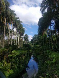image d'un canal entouré d'arbres très grands se reflétant dans l'eau